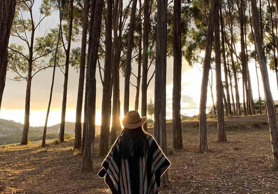 Bosque de Eucalipto Cusco